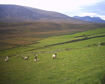 Mountains, bog, and sheep
