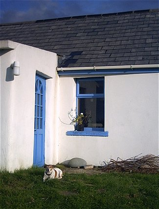 Dog-dog at door
