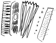 Piano Accordion sketch